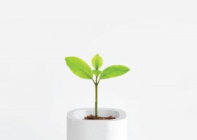 Modular Garden/Vaso tecnologico