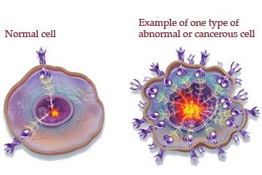 Cellula sana / Cellula cancro