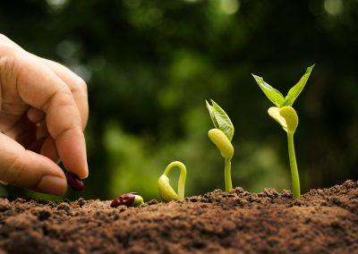 Agricoltura / Terreno sano?