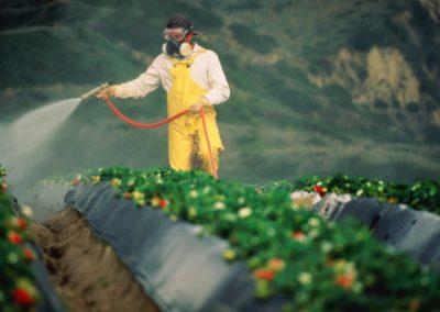 Pesticidi / Veleno / Cibo